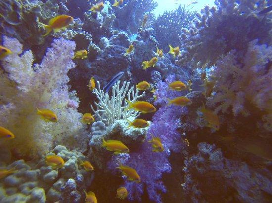 TGI Diving El Gouna: Dolphin house