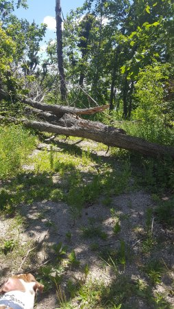 Buffalo Rock State Park: lots of trees down
