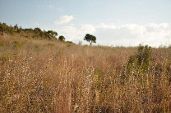 Graskop, Republika Południowej Afryki: photo4.jpg