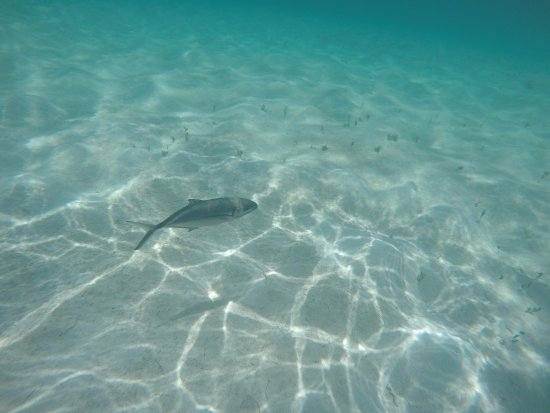 Northwest Point Resort: Just one of the many fish found at the island's shores.