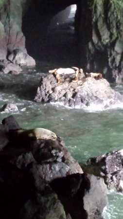 Sea Lion Caves: Sea Lion Cave