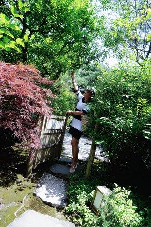 Anderson Japanese Gardens Rockford Il Top Tips Before You Go Tripadvisor