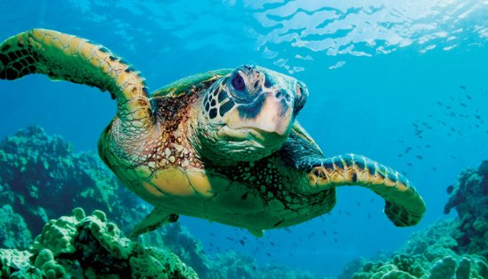Shark Restaurant : turtle3_large.jpg
