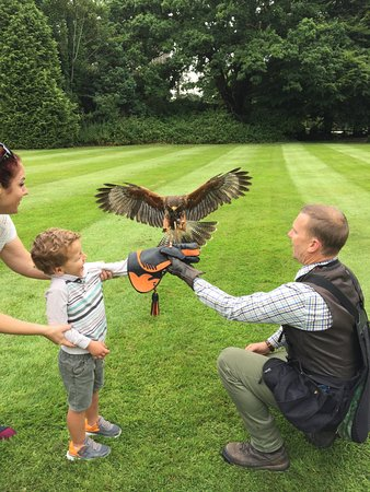 Waterford Castle Hotel & Golf Resort: Falconry at the Castle! Our favorite part of the trip!