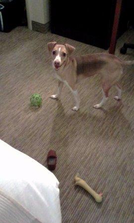 DuBois, PA: pet friendly rooms, with carpet