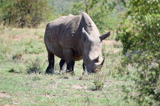 Ekala Eco Tours - Day Tours: Pilanesburg Safari - Rhino