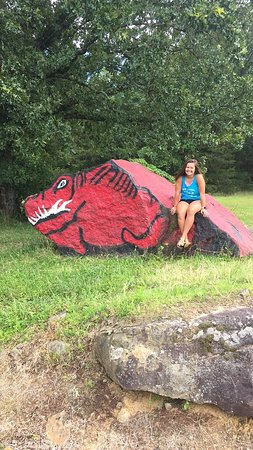 Fairfield Bay, AR: My daughter attends University of Arkansas-Fayetteville & we found a hog.