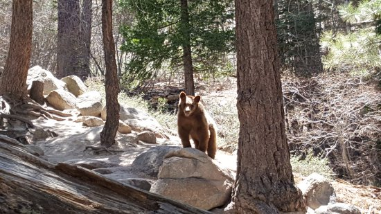 A fellow hiker on the lower part of Castle Rock Trail, Big Bear Lake