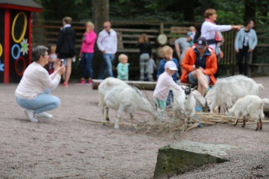 Klappa djuren på Barnens Zoo - Bild från Slottsskogen fe99c4a5a10be