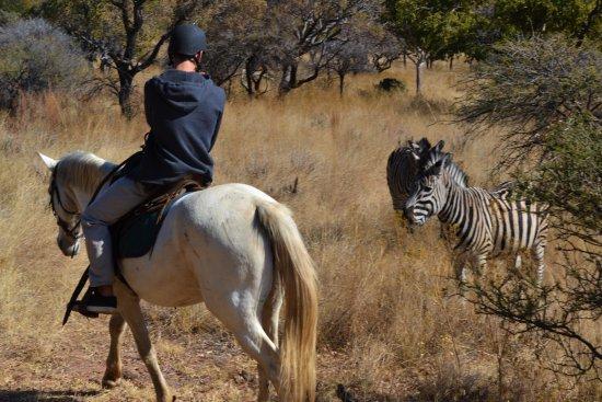 Hartbeespoort, Sudafrica: A Horseback Safari in the Silkaatsnek Nature Reserve allows you to meet the wildlife up close.