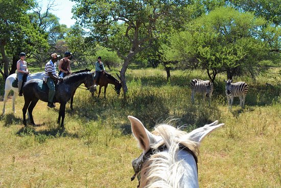 Hartbeespoort, Sudafrica: Horseback Safaris are the best way to experience nature.