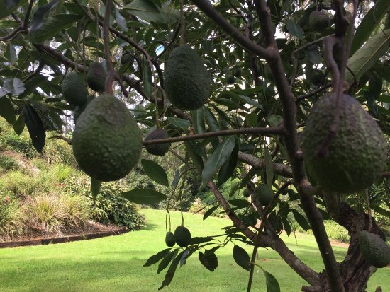 Avocado Sunset Bed and Breakfast: photo3.jpg