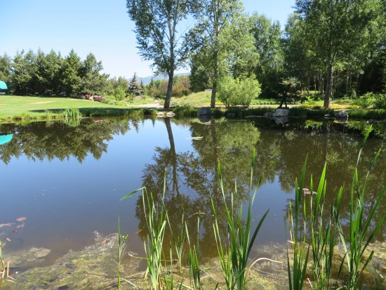 The Pond Picture Of Yampa River Botanic Park Steamboat Springs Tripadvisor