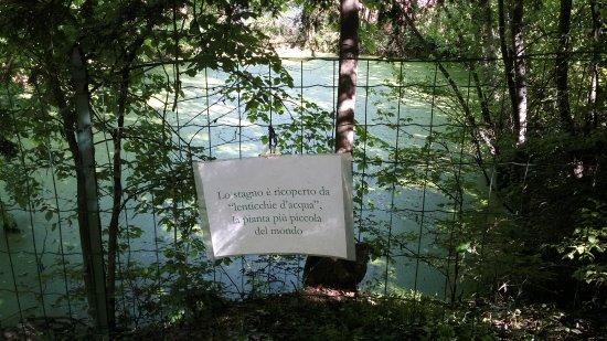 Parco del castello di Pralormo, particolare
