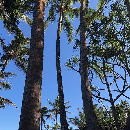 Pahoa, Havaí: photo3.jpg