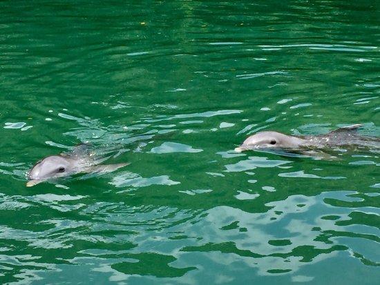Dolphin Discovery Tortola: photo0.jpg