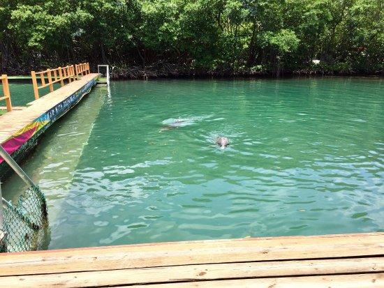 Dolphin Discovery Tortola: photo1.jpg
