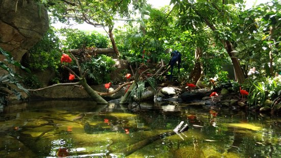 Moody Gardens Rainforest Pyramid - Picture of Moody Gardens ...