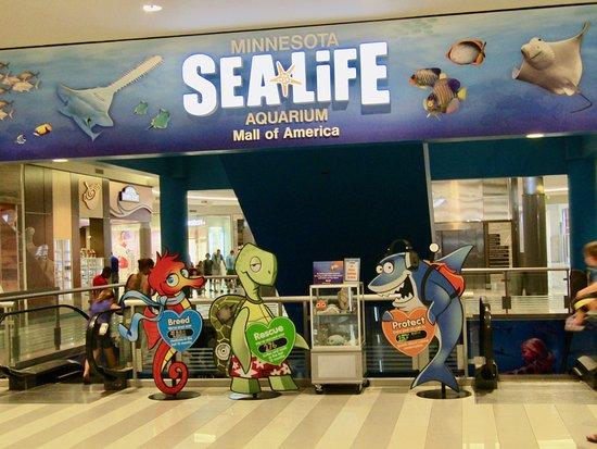 Aquarium Picture Of Mall Of America Bloomington