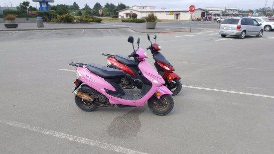 Ocean Shores, WA: Cute bikes!