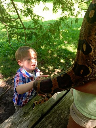 Rome, NY: Oh, yes, that is a python. And he warmed up to it after this photo.