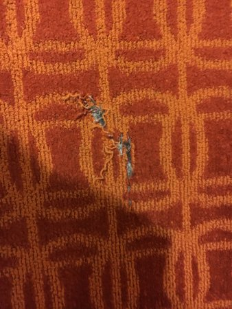 Pontoon Beach, IL: Ripped carpet in our room