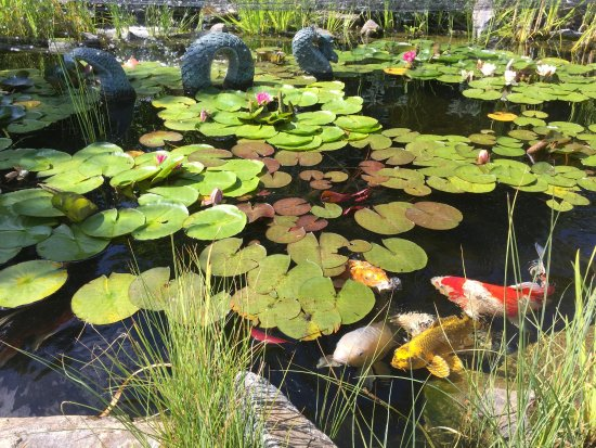 Okanagan Koi and Water Garden