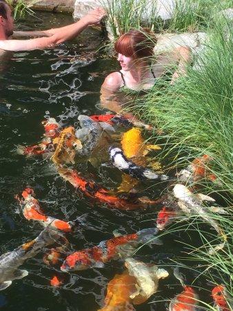 Okanagan koi and water garden kelowna all you need to for Koi pond kelowna