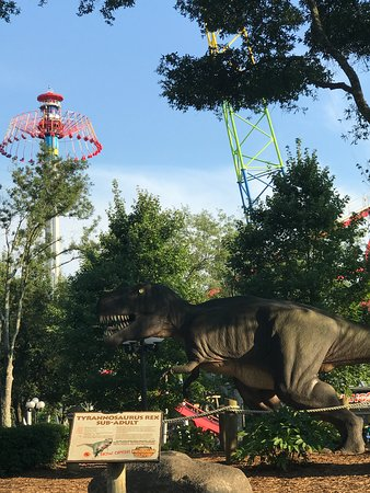 CAROWINDS, Charlotte - Restaurant Reviews & Photos - Tripadvisor