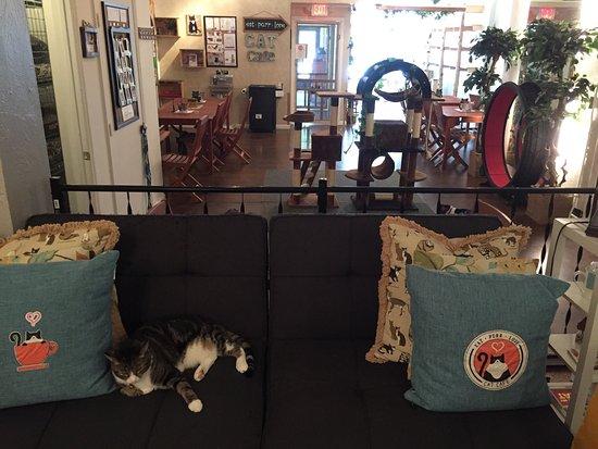 Cat Cafe Columbus Ohio
