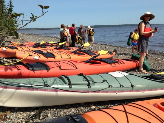 putting in for machias bay half day tour, summer, eastern maine