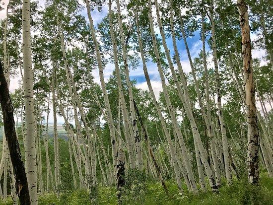 Ridgway, Colorado: photo1.jpg