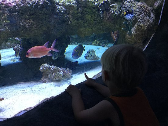 Austin Aquarium Tx Top Tips Before You Go Tripadvisor