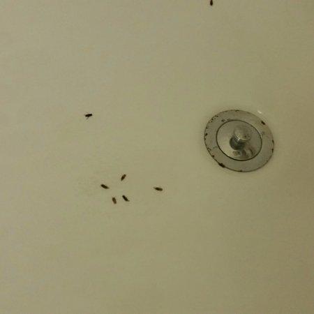 Travelodge Drumheller AB : bugs everywhere