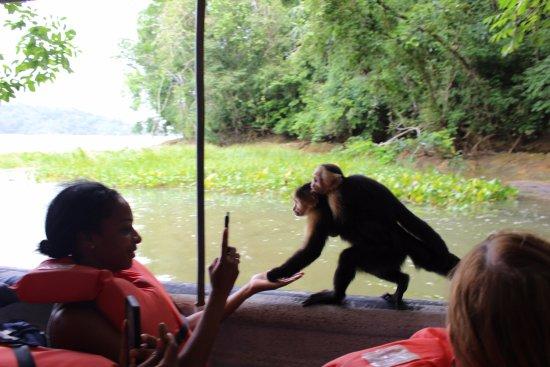 Jungle Land Panama: Day Excursions照片