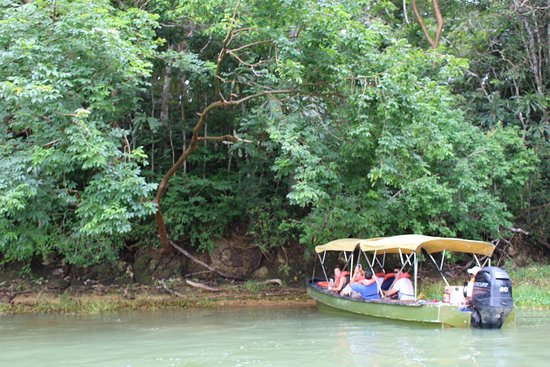 Jungle Land Panama: Day Excursions: the boats fit about a dozen people.
