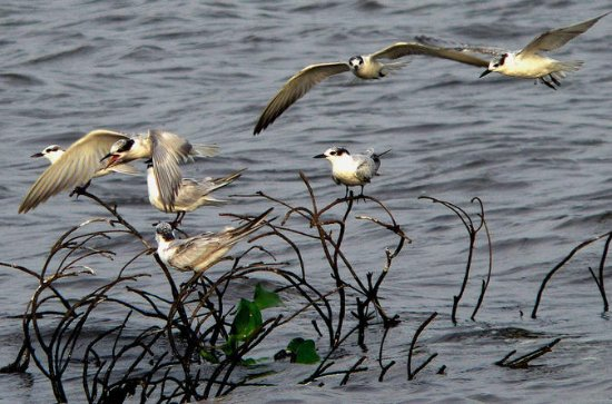 Private Muthurajawela Sanctuary Bird Watching Tour from Colombo or...