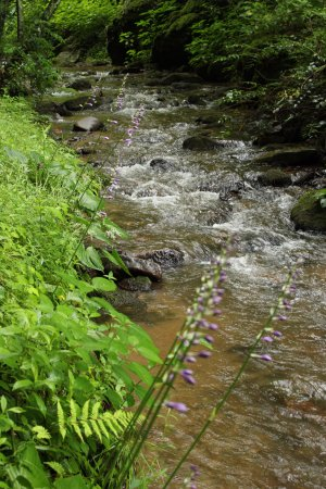 Moonshine Creek Campground: Very relaxing and rocky stream runs directly through the park