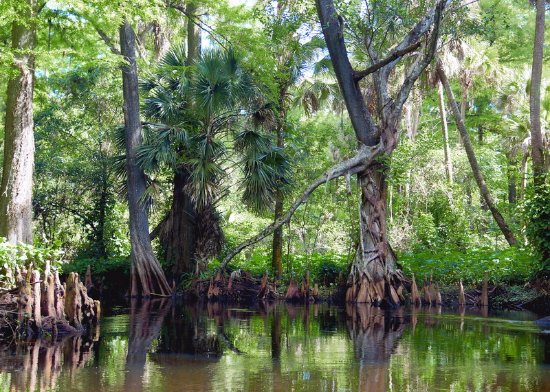 Jupiter, FL: Loxahatchee River canopy