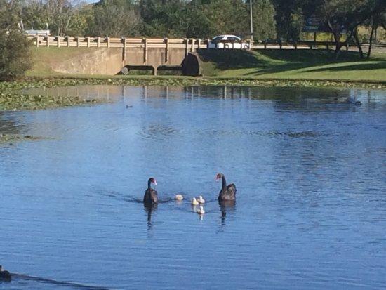 Gympie, Australien: Lake Alford