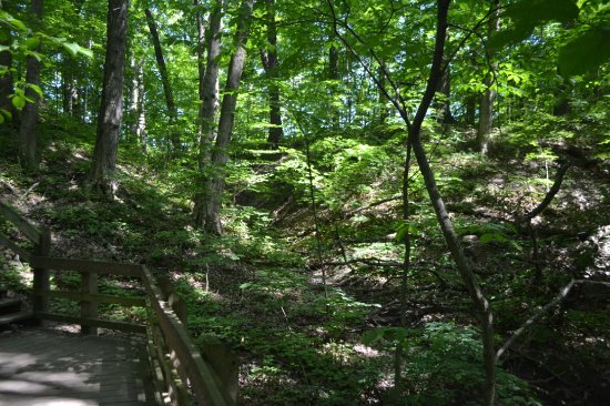 Porter, IN: Beautiful dappled lighting throughout the ravine.
