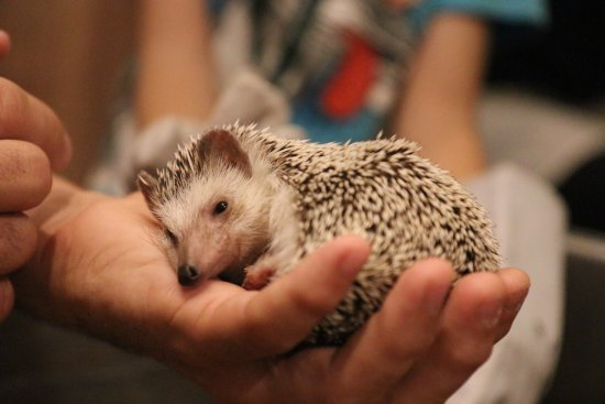 Photo1 Jpg Obrazek Zarizeni Hedgehog Cafe Harry Harajuku Shibuya Tripadvisor
