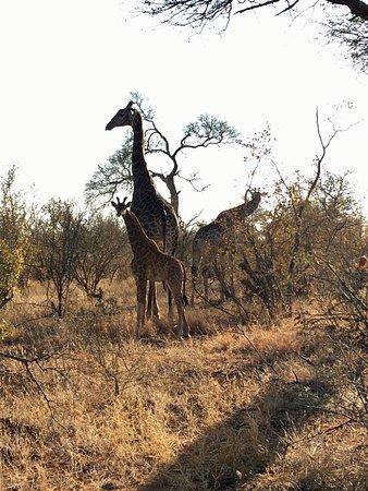 Balule Nature Reserve, Sudafrica: photo1.jpg