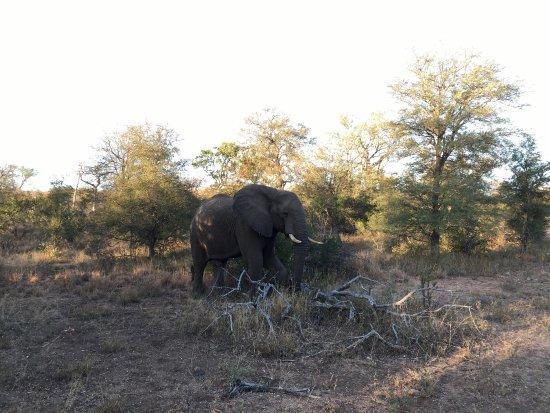 Balule Nature Reserve, Sudafrica: photo2.jpg