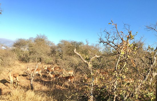 Balule Nature Reserve, Sudafrica: photo5.jpg
