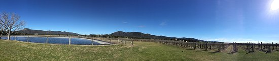 Broke, Australia: Beatiful Stomp vineyards
