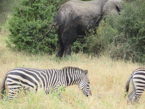 Tarangire National Park, Tanzania: photo3.jpg