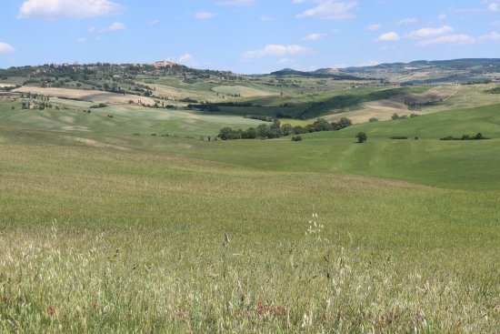 Just in Tuscany  Day Tours : Manuele will show you the beauty of Tuscany!