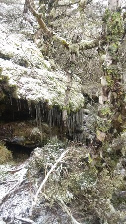 Tasman, Yeni Zelanda: Icicles beside the track