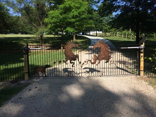 Excelsior Springs, MO: Four Horses and a Dog Vineyard & Winery